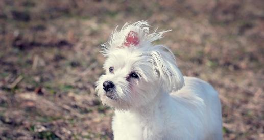 dog-1309377.jpg