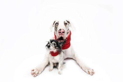 Doge Duo