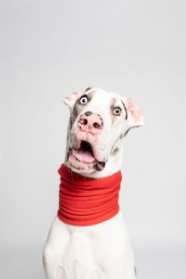 Dorky Doggo